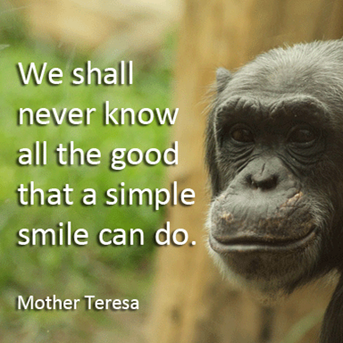 19_Quotes_Mother_Teresa.png